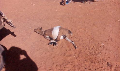 Viehmarkt in Garango