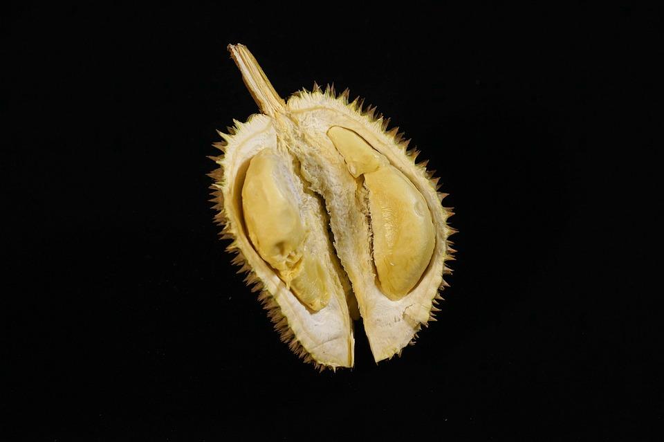 durian-fruit-2786329_960_720